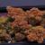 Buy Weed Online http://legitweedshop.com/