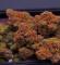 Buy Weed Online http://legitweedshop.com