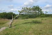 Vindomsust træ