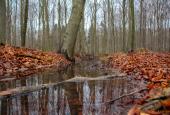 Borgnakke Skov