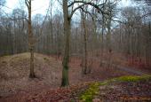 Gæsterehøje i Borgnakke Skov