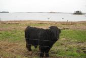 Udsigt over Roskilde Fjord