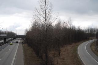 Krydset mellem Holbækmotorvej og Motorring 3, træer