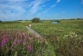 Engene nord for Nørre Vosborg