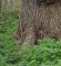 Træ i Kongelundsskoven