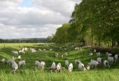 Munkekanalen med græssende geder