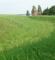 Dronningholm