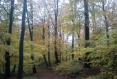Blade og skov i personificeringen Tryghed