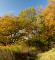 Efterårsskov Borgnakke