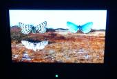 sommerfugler på heden