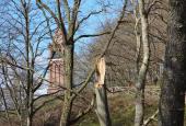 tårn set fra skoven