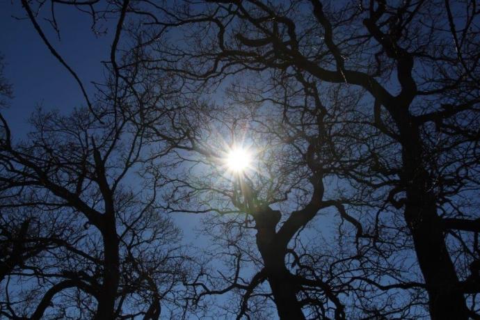 Sol igennem træerne