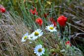 Mange blomster omkring dyssen