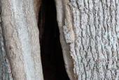 hult træ ved dyssen.