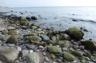 Kabler på Føllesbjerg Strand