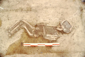 En lille død viking - Galgedil