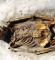 En død viking -Galgedil