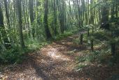 Når skoven tier stille for mig;