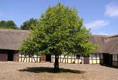 Hjemstavnsgårdens gårdsplads