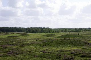 Dommerby Hede