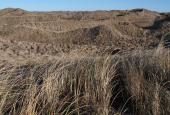 dune heats in January