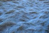 more frozen heaths