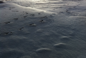 sand dunes covered by snow