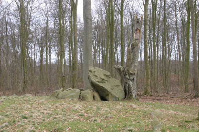 Stendysse i Pipstorn Skov