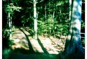 Borgnakke skov i efterårslys