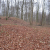 Borgnakke Forest