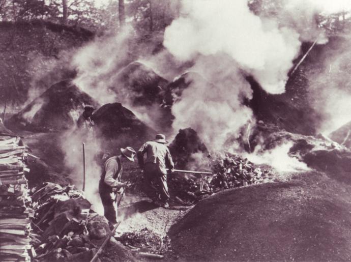 Kulsvier fra Gribskov 2