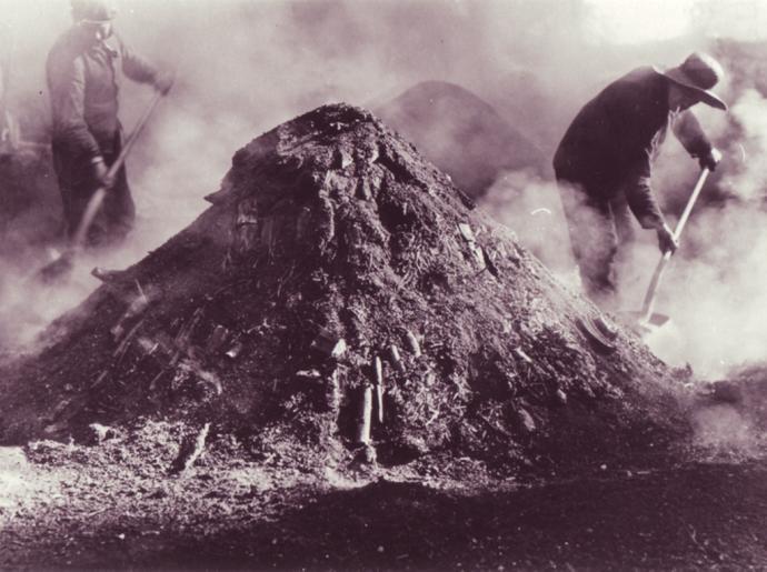 Kulsvier fra Gribskov 3