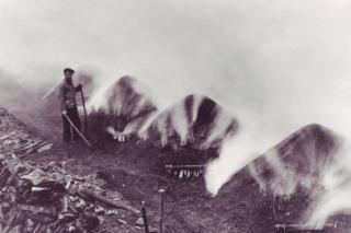Kulsvier fra Gribskov 1