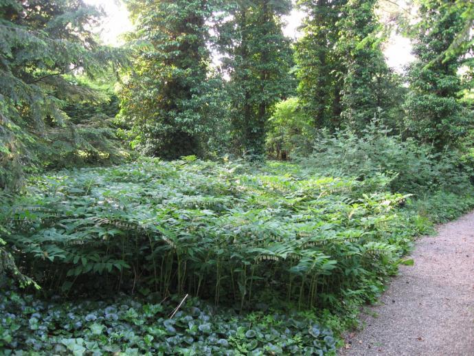 Mariebjerg Kirkegård det vilde