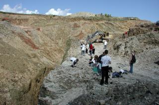 Fossiljagt i Molergrav
