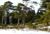 Tibirke Bakker træer