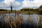 Lille sø ved Petersborggårdvej/Naturskole i Vestskoven