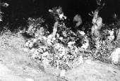 Trækorset i Hørbylunde
